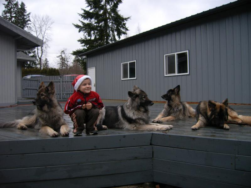 Christmas Kai and his Shilohs